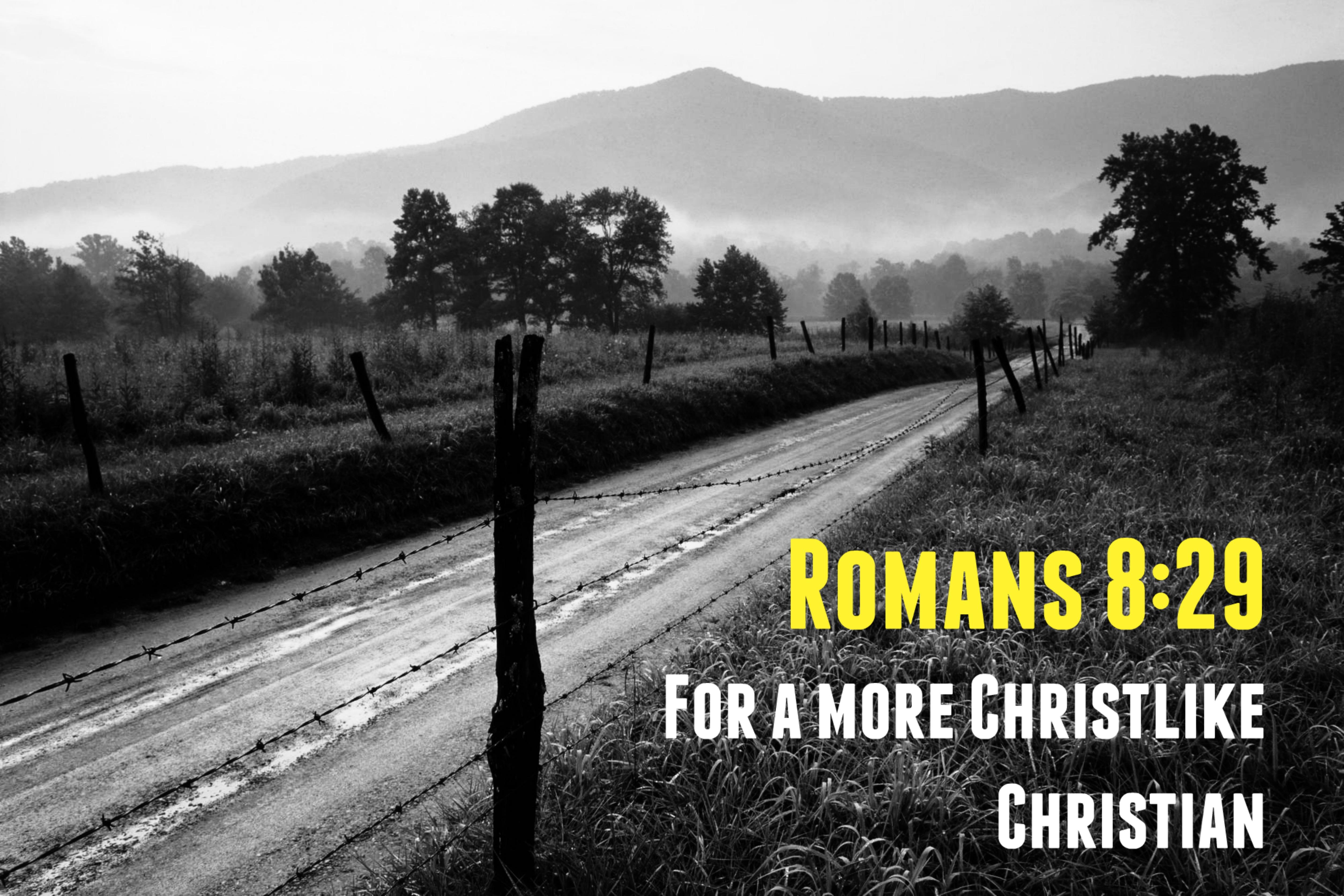 Romans 8:29 Ministries
